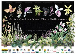 orchid_poster