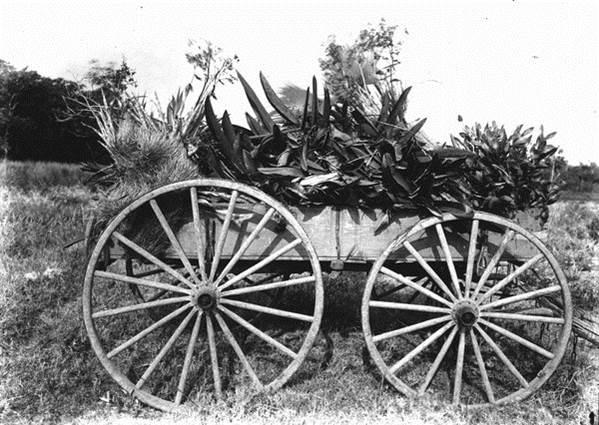 Florida - 1916 ©John Kunkel Small, State Archives of Florida