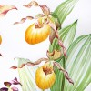 Botanical Illustration by Kathleen Marie Garness